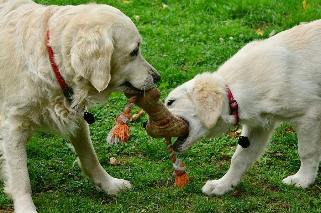 Top 10 Interactive Dog Toys To Keep Your Pet Busy