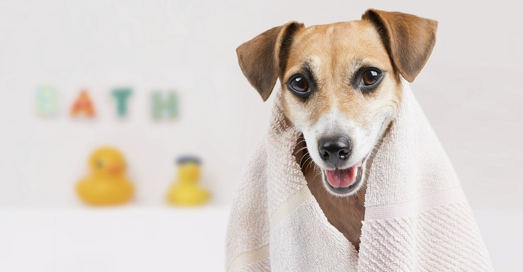 Benefits of Using a Dry Dog Shampoos