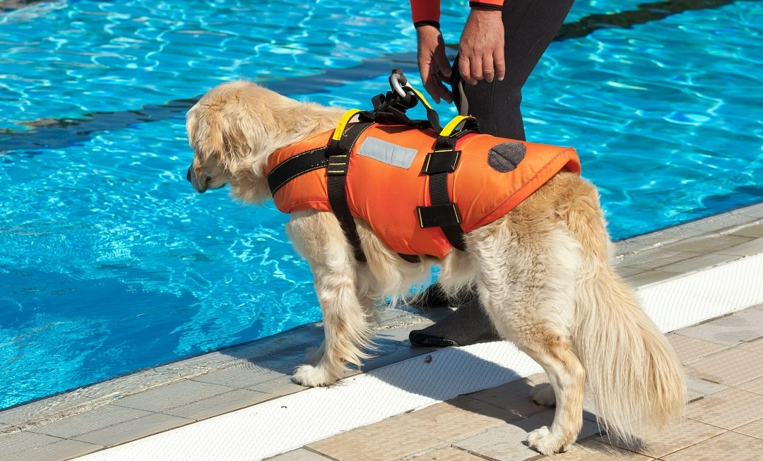 Best Dog Life Jackets & Vests For Owners Who Want Safety First