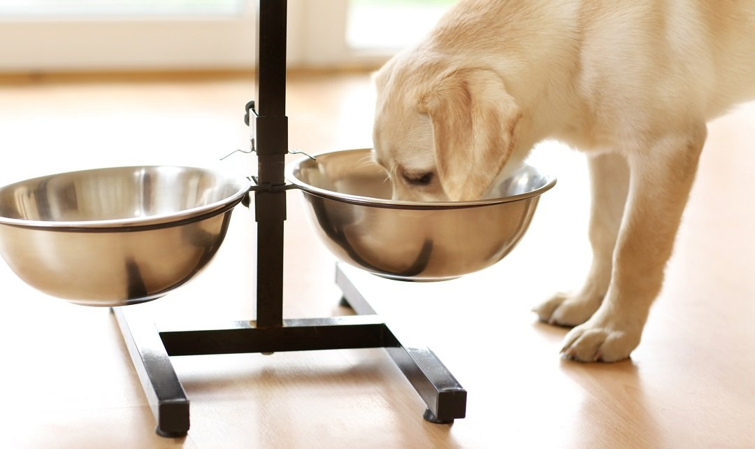 Best Elevated Dog Bowls for Dogs of All Sizes