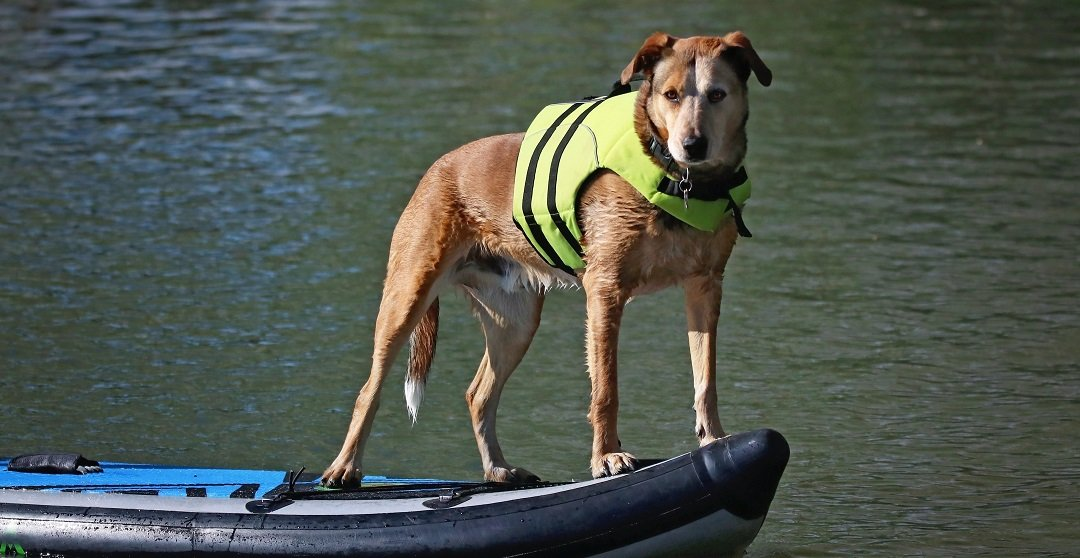 Best Dog Life Vests