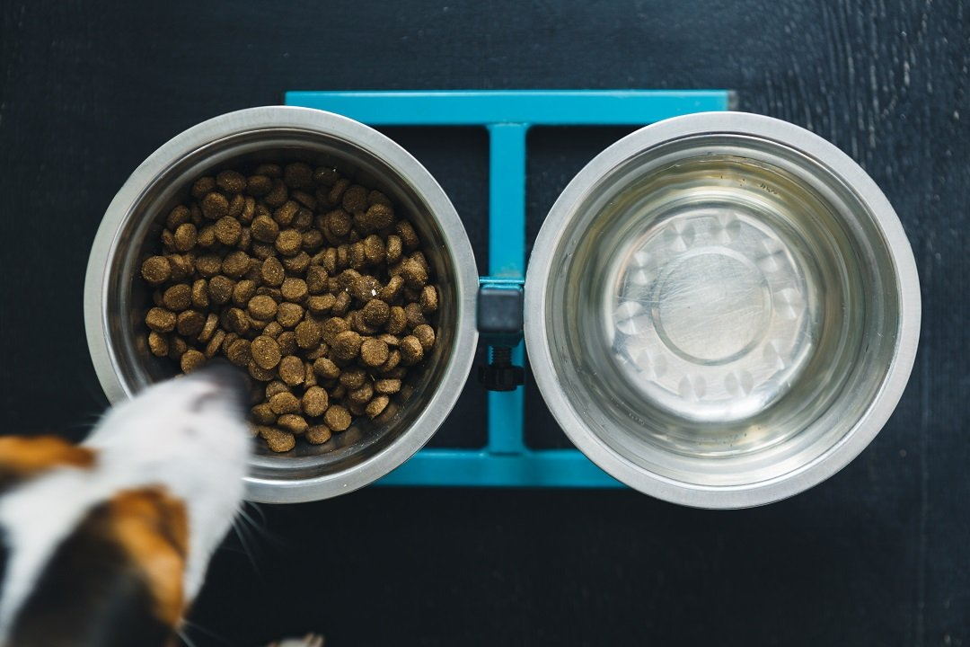 Do's and Don'ts of Dog Bowls