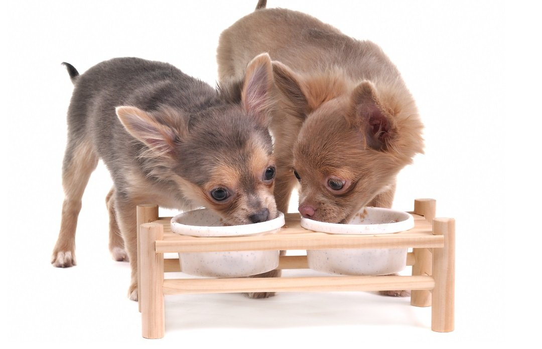 Materials of Elevated Dog Bowls