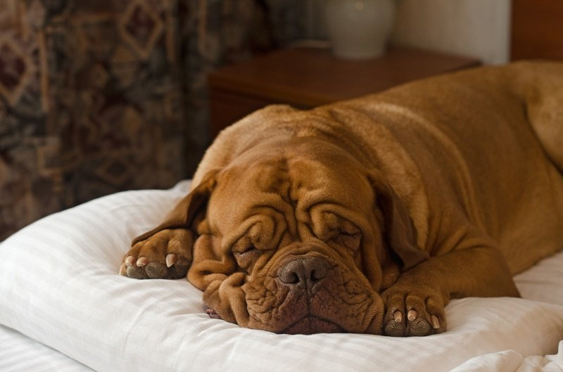 Best Orthopedic Dog Beds for Perfect Rest & Recovery