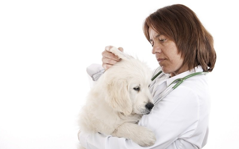 How to spot an ear infection in dogs