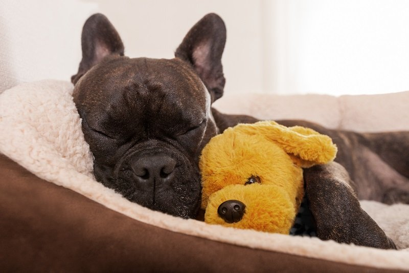 What makes a great orthopedic dog bed
