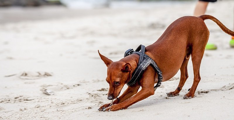 What makes a great harness for a small dog