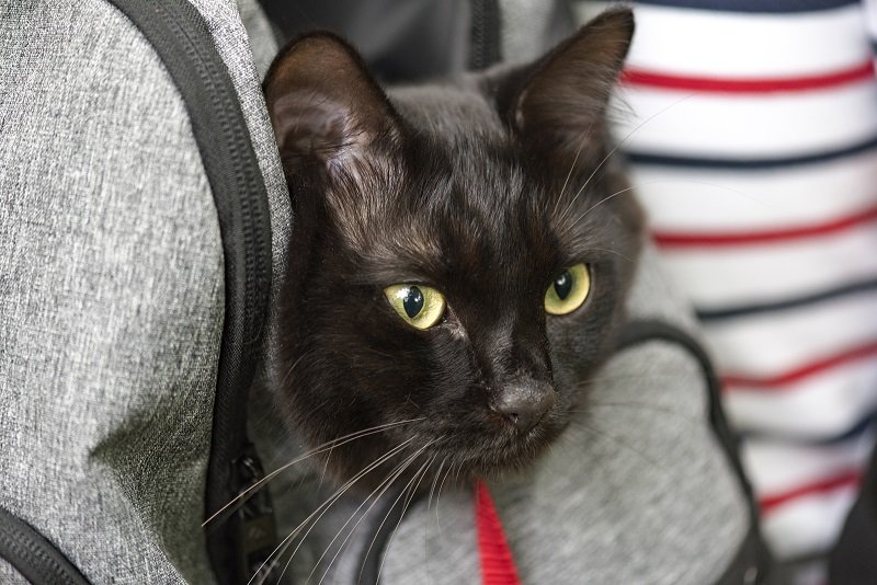 Do's and Don'ts To Do With a Cat Carrier