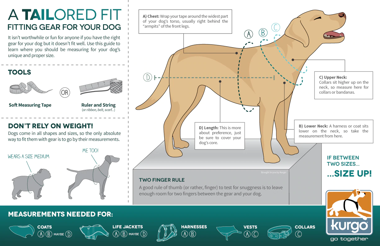 How To Measure Your Dog for a Harness