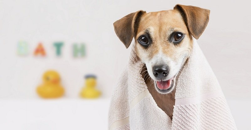 Benefits of Using a Dry Dog Shampoo