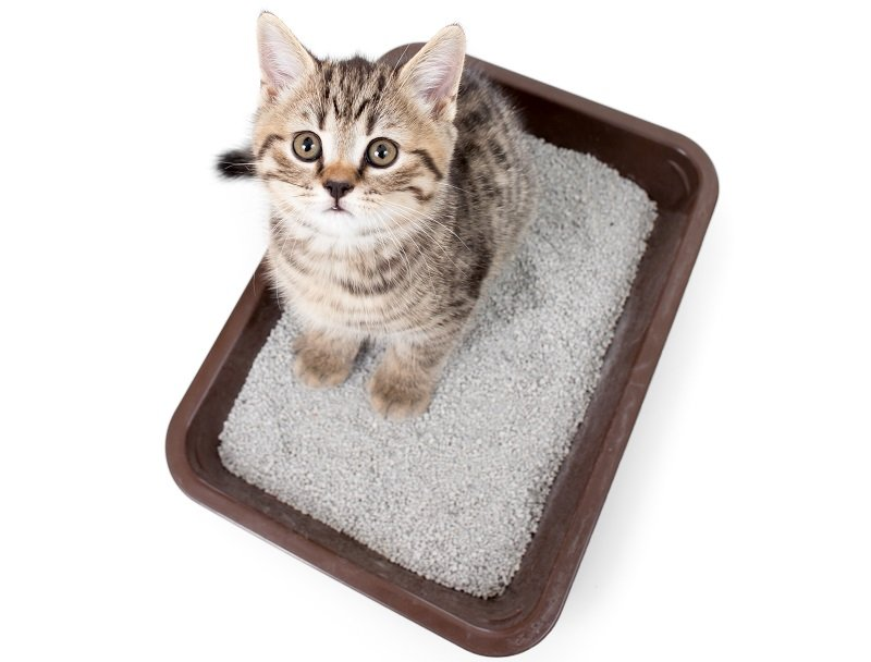 Choosing the best cat litter for odor control
