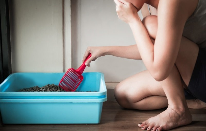 How to prevent the cat litter box smelling bad