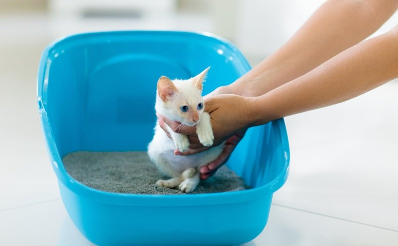 How to train your cat to use a cat litter box?