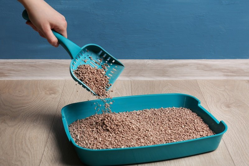 What are a dust-free cat litter and the benefits of using it