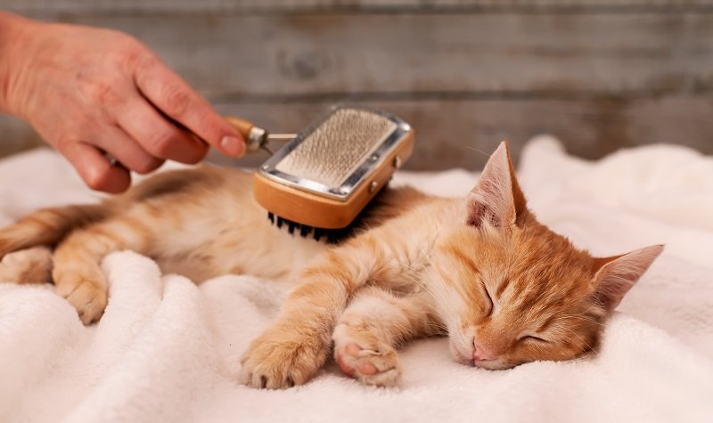 What is a cat brush and why do I need one?