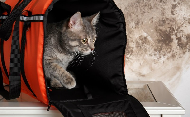 How To Clean and Maintain a Traveling Cat Carriers