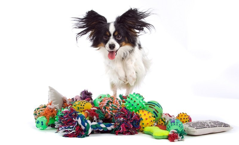 Dog toys (an assortment)