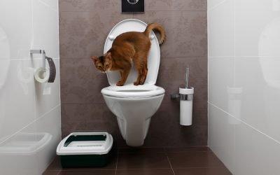 9 Best Flushable Cat Litters – Natural, Biodegradable & Septic-Safe