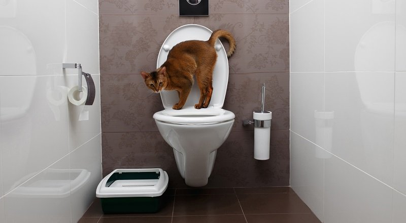Finding the best flushable cat litter - a complete guide with all the answers