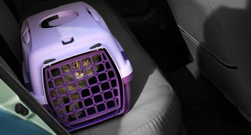 How To Learn Your Cat to Use a Portable Cat Carrier