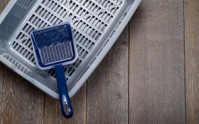 Best Cat Litter Scoops of 2020 [Buying Guide]