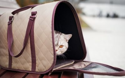The 15 Best Cat Carriers For a Safe Travel Without Stress