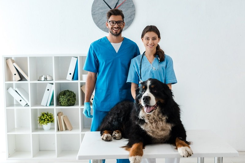 Veterinarian - the man on the speed dial