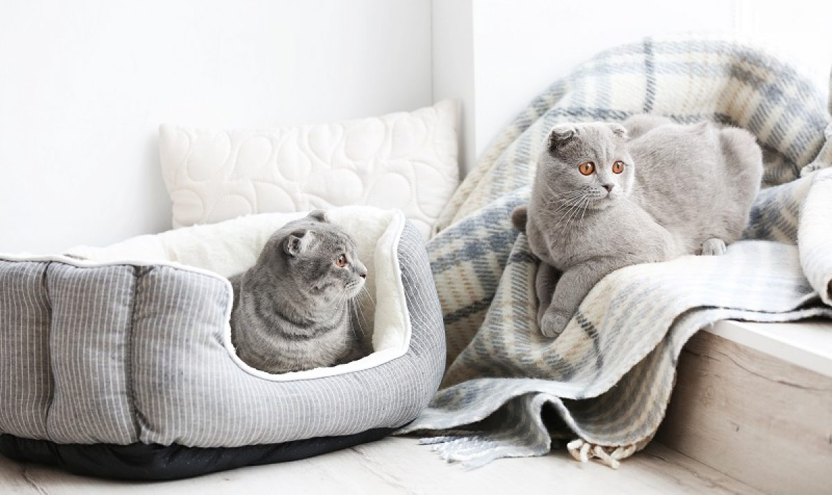 Picture of: Best Heated Cat Bed Of 2020 Cozy Warm Cat S Shelter Toolsofpets