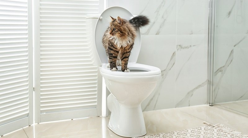 Why should I use flushable cat litter